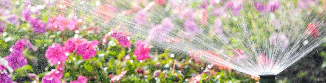 Meet your New Sprinkler System